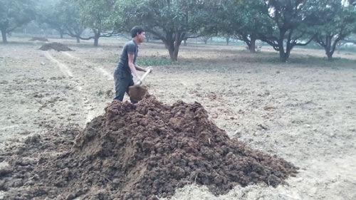 गोबर की खाद से बढ़ती है जमीन की उर्वरा शक्ति