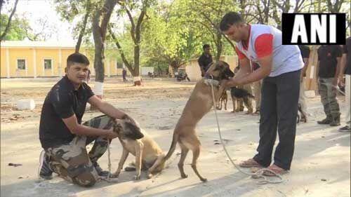 मध्य प्रदेश सरकार कुत्तों के तबादला पर घिरी, BJP बोली हाय रे बेदर्दी