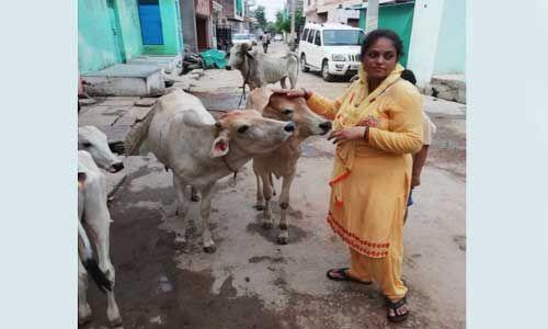 ढेड़ साल से कैंसर से पीडि़त गाय के जीवन को सुरक्षित बचाया