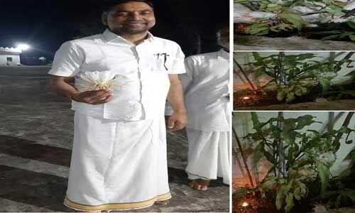 विधायक जालम सिंह पटेल के घर पर खिले चार ब्रम्ह कमल