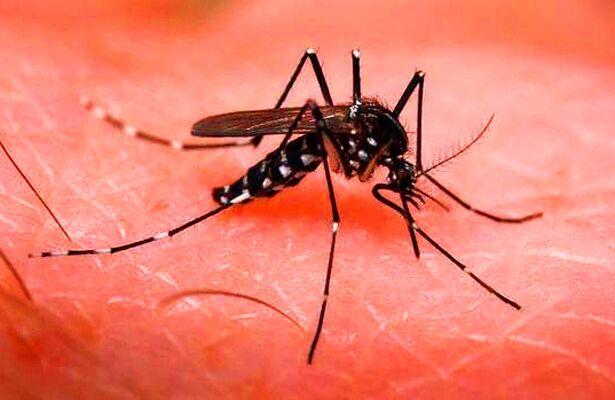 97 तक पहुंची डेंगू के मरीजों की संख्या
