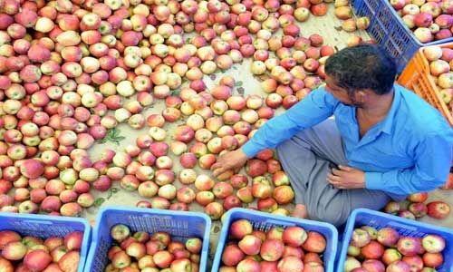 जम्मू-कश्मीर के किसानों को सेब और केसर के मिले उचित मूल्य : वित्त मंत्री