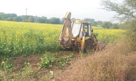 9 बीघा में भी नहीं निकाल पाएं प्रीतम का नाम, उड़ा दी सरसों की फसल, देखें वीडियो