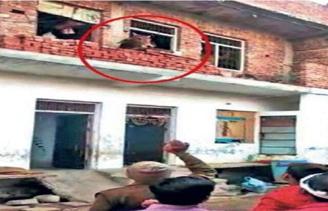 भिंड : घर की छत पर पहुंचे सांड को रस्सी बांधकर उतारा