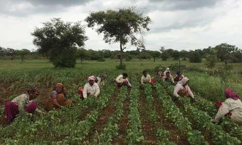कृषि कानूनों पर पंजाब के विशेषज्ञों की मुहर