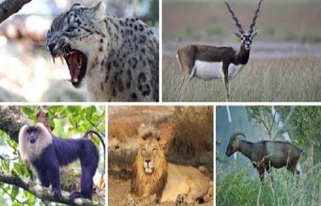 अब विदेशी प्रजाति वन्य-जीव पालते हैं तो विभाग को सूचना दीजिए, नहीं तो होगी जेल