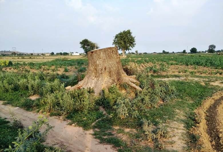 निजी स्वार्थ की खातिर हरा भरा नीम का पेड़ काटा