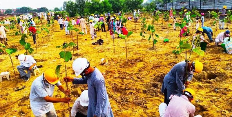 एक हजार लोगों ने किया तीन हजार पौधों का रोपण