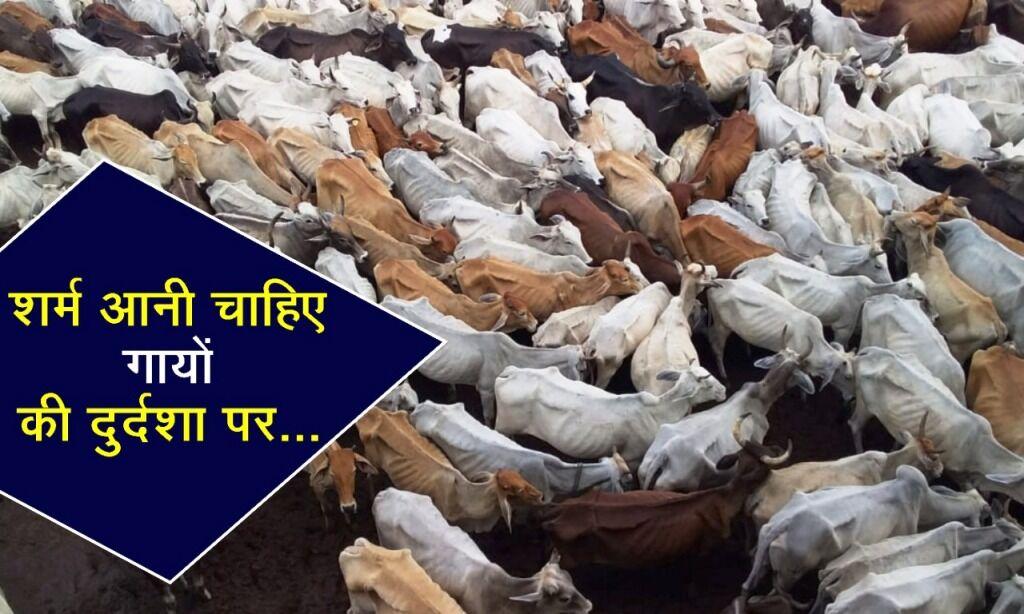 हे ईश्वर, सद्बुद्धि दो इन निगम अधिकारियों को, गायों की दुर्दशा का बन रहे हैं कारण