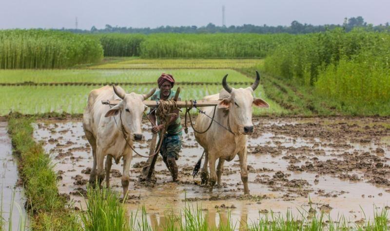 किसानों को कृषि उत्पाद बेचने की खुली आजादी देंगे कृषि सुधार कानून