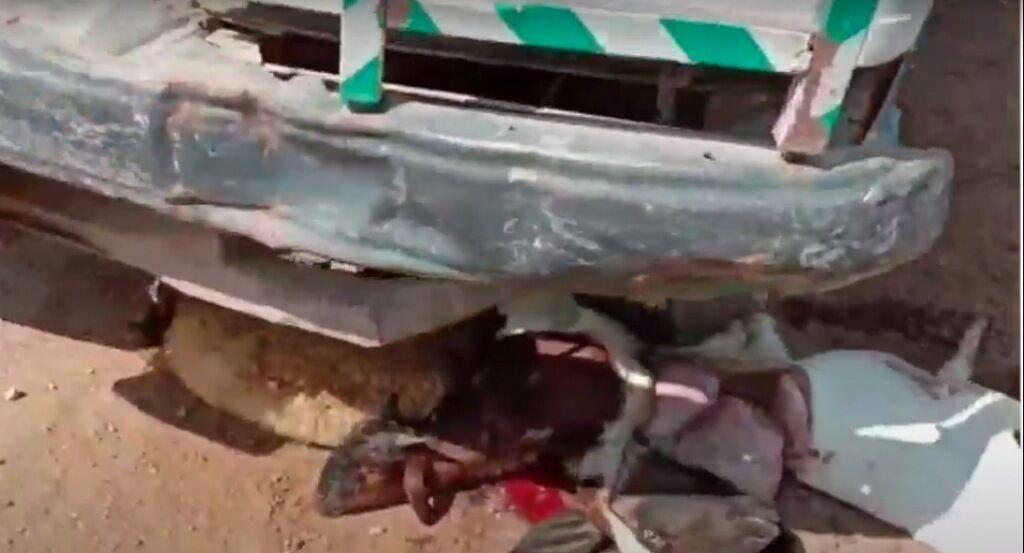 अनियंत्रित ट्रक ने बकरियों को रौंदा, 50 की मौत, कई घायल