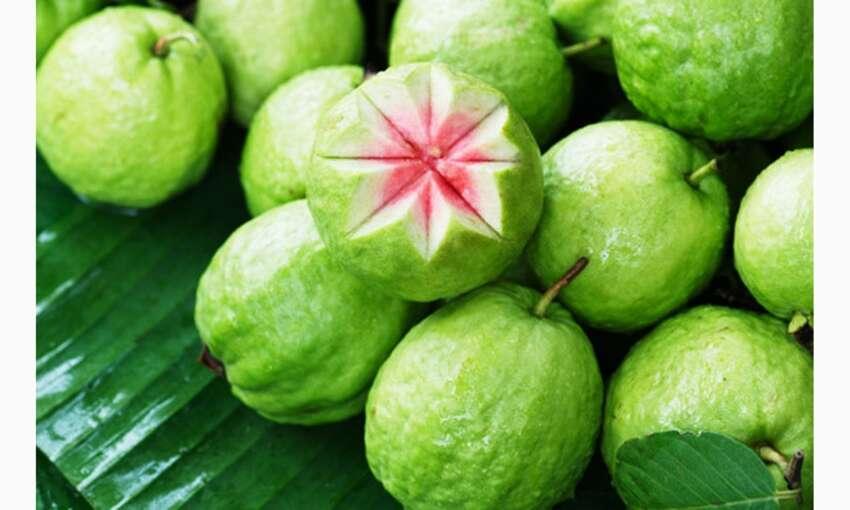 अमृत फल अमरुद इम्युनिटी बढ़ाने के साथ डायबिटीज, कब्ज में सहायक