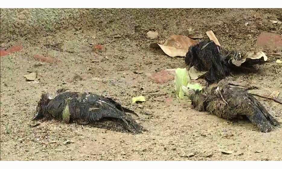 बर्ड फ्लू : दिल्ली में 20 कौवें मिले मृत, अब तक 200 कौवों की मौत से अलर्ट घोषित