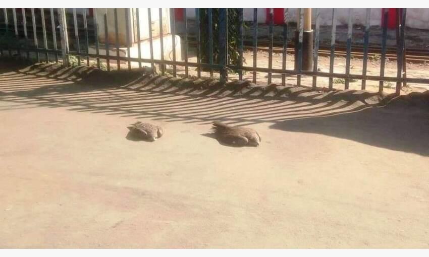 ग्वालियर में बर्ड फ्लू के दस्तक की बढ़ी आशंका, स्टेशन पर दो चील मिली मृत
