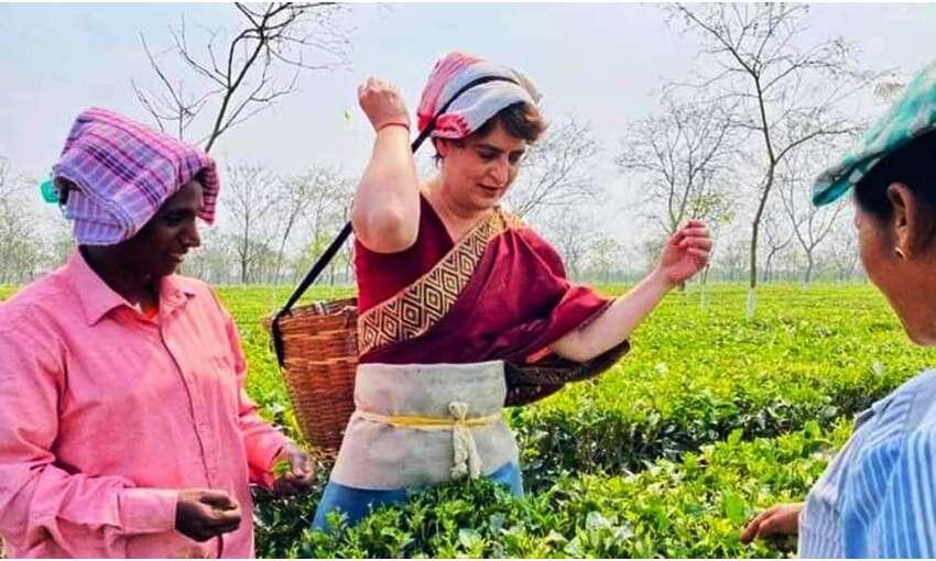 प्रियंका गांधी ने तोड़ी चाय पत्तियां, तेजपुर में करेंगी रैली