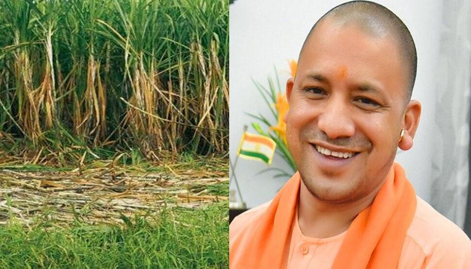 गन्ना उत्पादन में लखीमपुर के अचल कुमार रहे अव्वल, सीएम योगी करेंगे सम्मानित