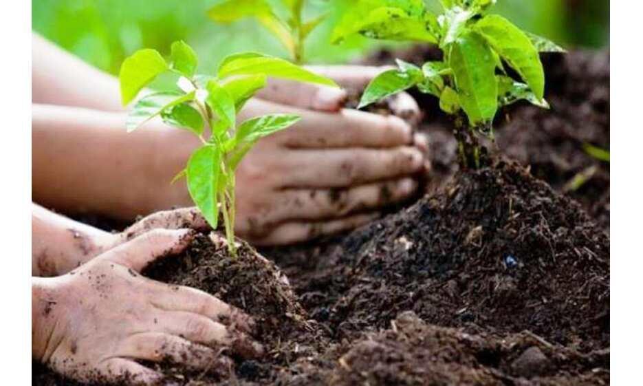 कोरोना की वजह से ऑक्सीजन की कमी साफ संकेत है की पर्यावरण को भी बचा लो