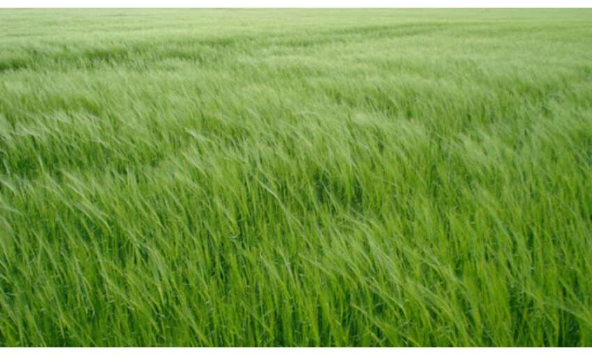 केंद्र सरकार का किसानों को तोहफा: खरीफ की फसलों पर बढ़ाई MSP,  देखें सूची