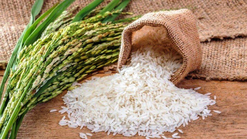 भारत के बासमती चावल को PGI टैग मिलने से किसानों की बदलेगी किस्मत,  ये होंगे फायदे, पाकिस्तान में विरोध शुरू