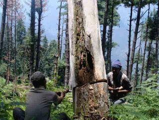 विकास के बहाने दिल्ली में पेड़ों की बलि