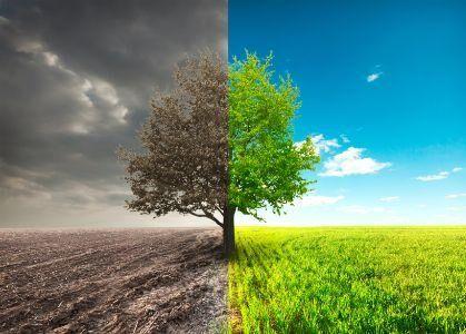 पर्यावरण : जमीनी हकीकत
