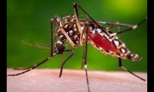 नमी युक्त वातावरण में पनपते हैं मच्छर
