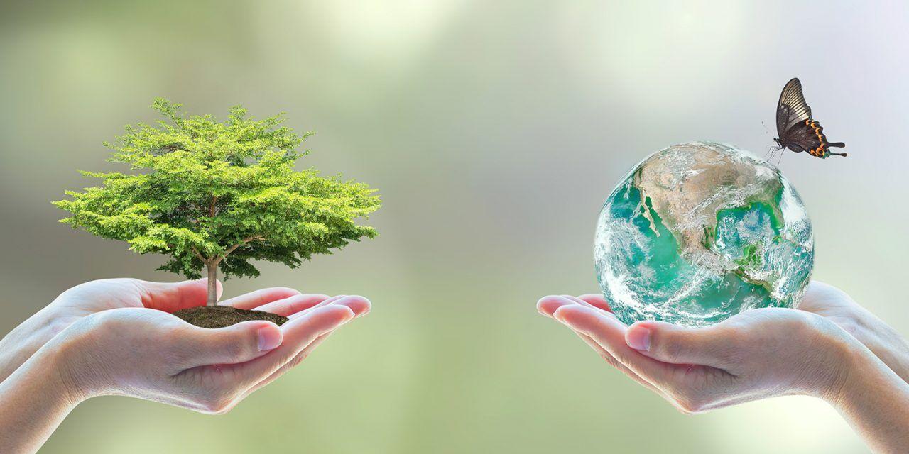 पर्यावरण विशेष : पृथ्वी व्यथित है