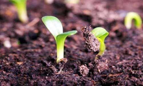 रोजगार के अवसर भी पैदा कर रही जैविक खेती