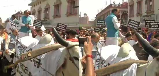 विजय गोयल ने दिल्ली सरकार से पेट्रोल-डीजल पर वैट घटाने की मांग को लेकर चलाई बैलगाड़ी