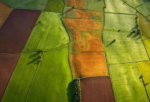 कृषि को मुनाफे का सौदा बनाने के लिए उठाए जाएं ठोस कदम