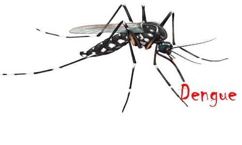 डेंगू के संभावित एक और मरीज की मौत