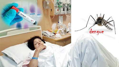 कानपुर में डेंगू के 280 मरीज पॉजीटिव मिले