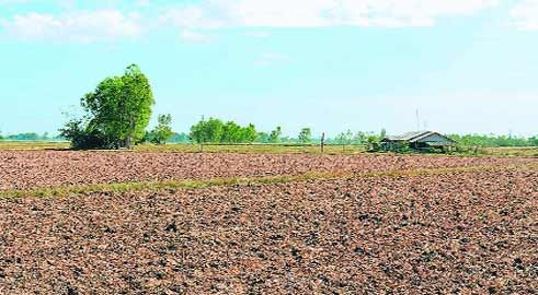 कृषि भूमि का पंजीयन कराते ही शुरू हो जाएगी नामांतरण प्रक्रिया