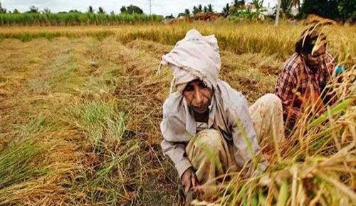 किसानों के चहुंमुखी विकास के लिए सरकार कर रही है काम