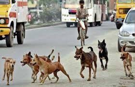 आवारा कुत्तों के मामले में नगर निगम की व्यवस्था ध्वस्त