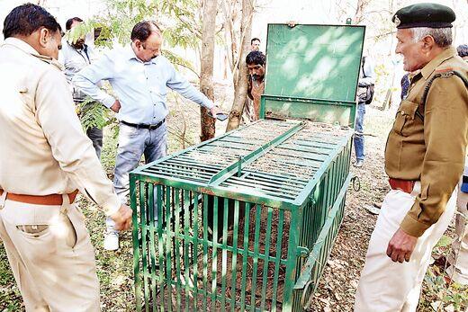 दहशत में कॉलोनीवासी, नहीं पकड़ा गया तेंदुआ
