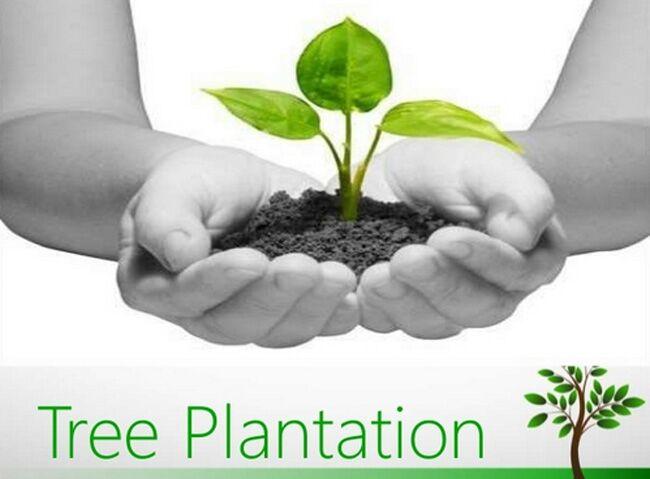 दस फीट की ऊंचाई वाले पांच लाख पौधे लगाएगा निगम