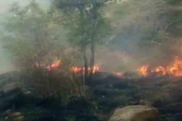 तमिलनाडु : जंगल में लगी भीषण आग में 9 लोगों की मौत