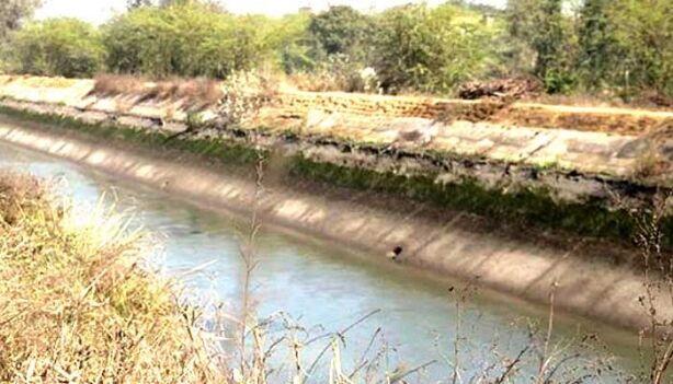 हरियाणा: भाखड़ा नहर में सफाई के दौरान मिलीं 12 लाशें